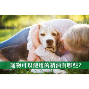 寵物芳療的基本知識!貓狗可以使用的精油有哪些?