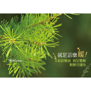 松針精油Pine needle