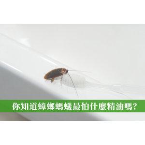 蟑螂螞蟻最怕什麼精油?驅蟲精油排行榜