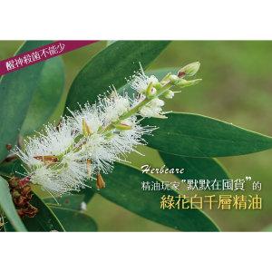 綠花白千層精油Niaouli
